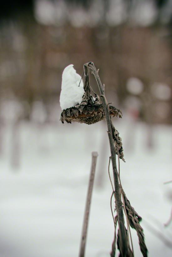 "Day 771 ""Snow Cap"" | Thaddeus Miles 365 | TBL part one"