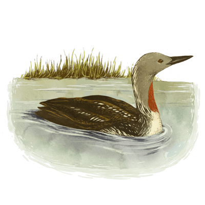 An Image of a duck, reminiscent to Esther Ehrlich's Nest, a middle-grade book that is about the experience of growing up.   The Black Lion Journal   The Black Lion