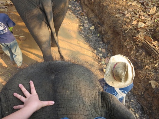 Place hands on the elephant's head.