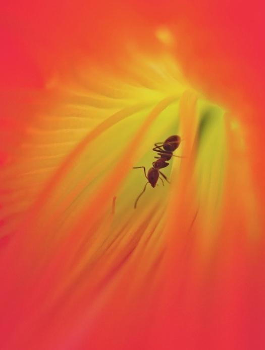 cactus-flower-2