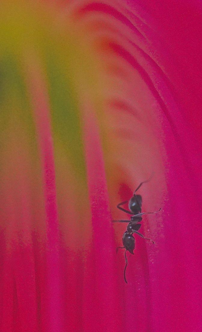 cactus-flower-5