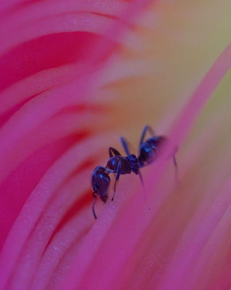 cactus-flower-6