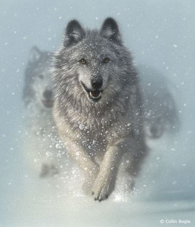 Interview   James Matlack Raney Talks To Us About Lord Of The Wolves, Finding Inspiration From Experience, & Subduing Writer's Doubt (With Tips For Beginner Writers!)   The Black Lion Journal   The Black Lion   Black Lion