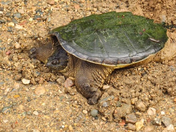 Tamarac National Wildlife Refuge