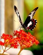 Traveling North: Flora & Fauna » Lynn B. Walsh