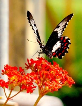 Traveling North: Flora & Fauna » Lynn B.Walsh