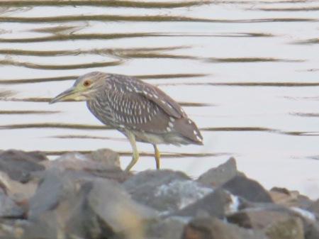 Bird in shore — Newbie Fultime RVers