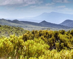 Tasmania – Hartz Mountains National Park | Lynn B. Walsh